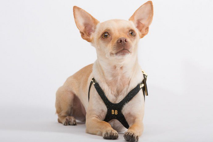 The Lux Dog harness