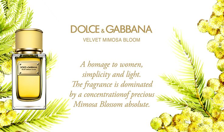 Luxuryretail_dolce-and-gabbana-new-perfumes-velvet-mimosa-bloom