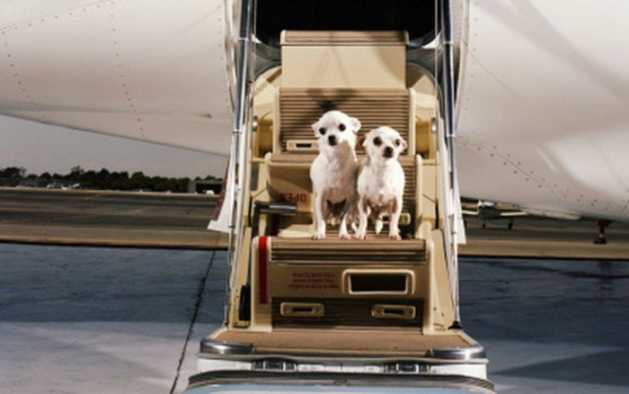 First Airport Terminal for Pets