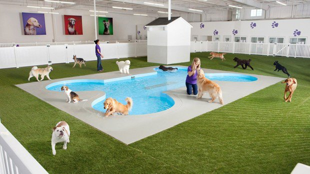 Luxuryretail_airport-terminal-for-pets-at-JFK-pool
